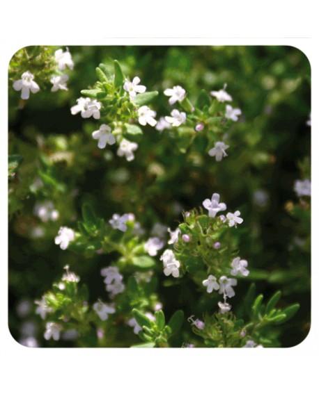 Thym à feuilles de sarriette (satureioides) Huile Essentielle de Pranarom