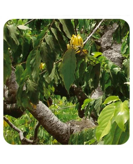 Ylang-ylang extra huille essentielle de pranarom