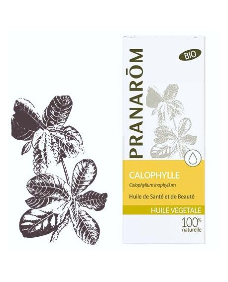 Calophylle Huile végétale BIO de Pranarom