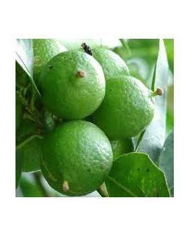 Lime - Citron Vert Huile Essentielle de Pranarom