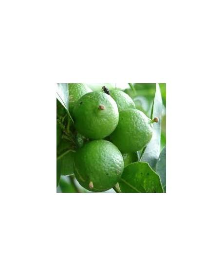 Citron zeste BIO Huile Essentielle de Pranarom