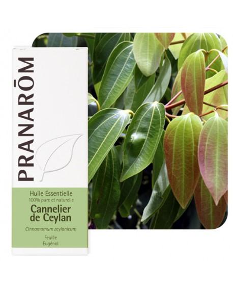 Cannelier de Ceylan (feuille), Huile Essentielle de Pranarom