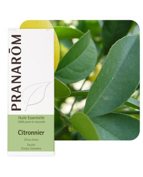 Citronnier feuille Huile Essentielle de Pranarom