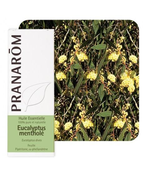 Eucalyptus mentholé Huile Essentielle de Pranarom