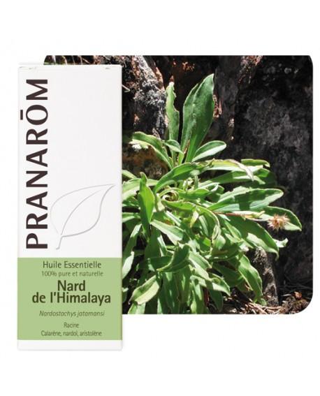 Nard de l'himalaya huile essentielle de Pranarom