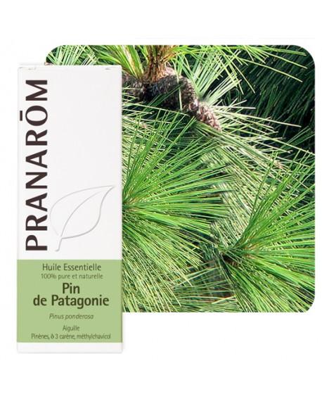 Pin de Patagonie, Huile Essentielle de Pranarom