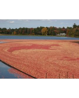 Cranberries séchées Biologiques 200g