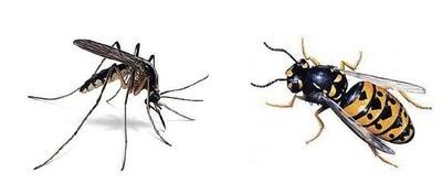 insectes aromapic